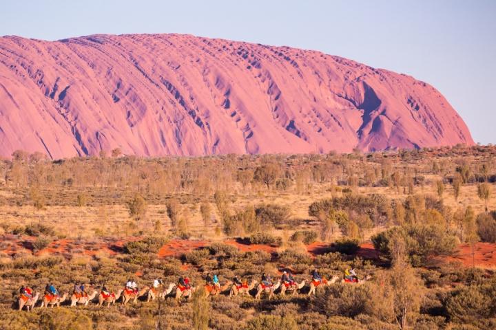 Uluru Camel Tours